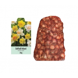 De Ree 25kg Bag Of Mixed Daffodil Bulbs 2020 Autumn 10/14cm Spring Flowering