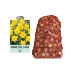 De Ree 25kg Bag Of Yellow Trumpet Daffodil Bulbs 2020 Autumn 10/14cm Spring