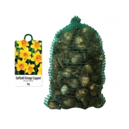 De Ree 5kg Bag Of Orange Cupped Daffodil Bulbs 2020 Autumn 10/14cm Narcissus