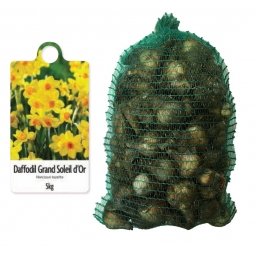 De Ree 5kg Bag Of Grand Soleil D'Or Daffodil Bulbs 2020 Autumn 10/14cm Narcissus
