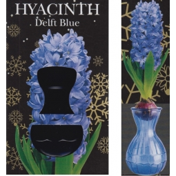 Blue Hyacinth Glass Vase
