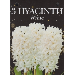 White Hyacinth 3 Bulbs Set